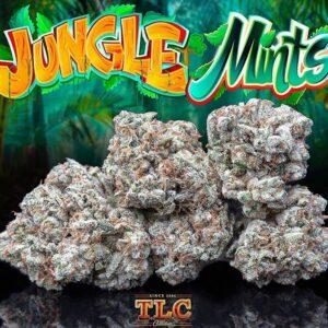 Jungle Mints jungle boy