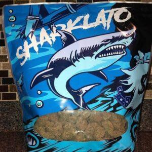 Sharklato Runtz weed